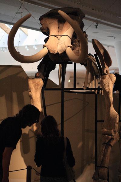 mamut-elott.jpg
